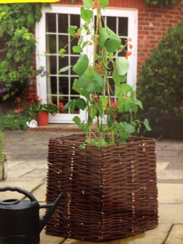 BEAN & PEA WILLOW PLANTER GARDEN VEGETABLE CLIMBINGPLANT GROW CA19